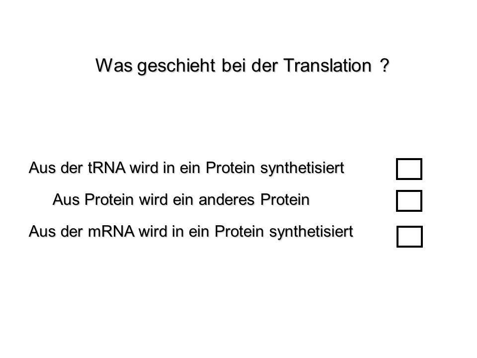 Aus der tRNA wird in ein Protein synthetisiert Aus der mRNA wird in ein Protein synthetisiert Aus Protein wird ein anderes Protein Was geschieht bei d
