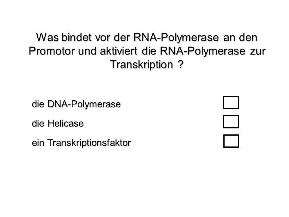 Was bindet vor der RNA-Polymerase an den Promotor und aktiviert die RNA-Polymerase zur Transkription ? ein Transkriptionsfaktor die DNA-Polymerase die