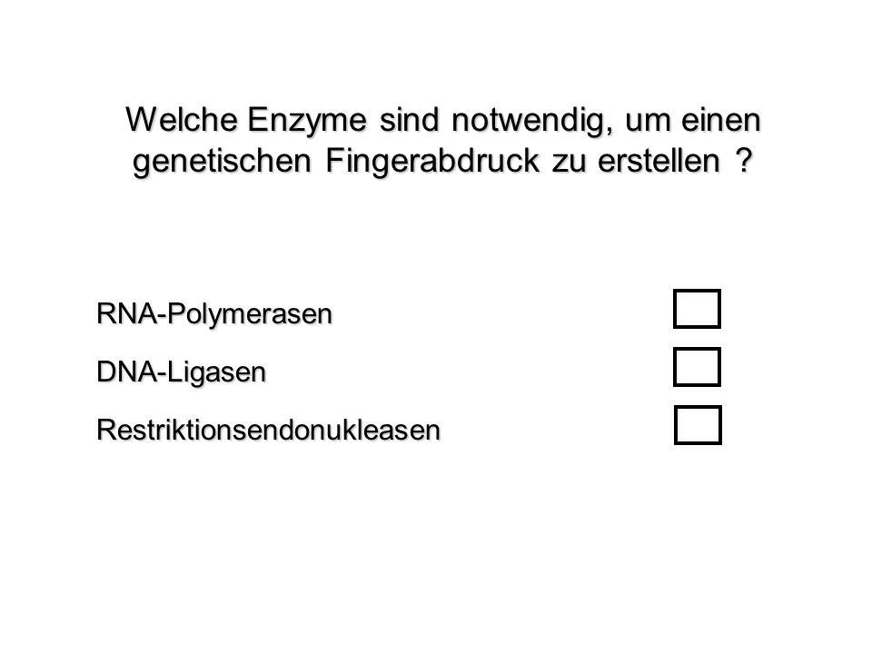 Welche Enzyme sind notwendig, um einen genetischen Fingerabdruck zu erstellen ? RestriktionsendonukleasenRNA-PolymerasenDNA-Ligasen