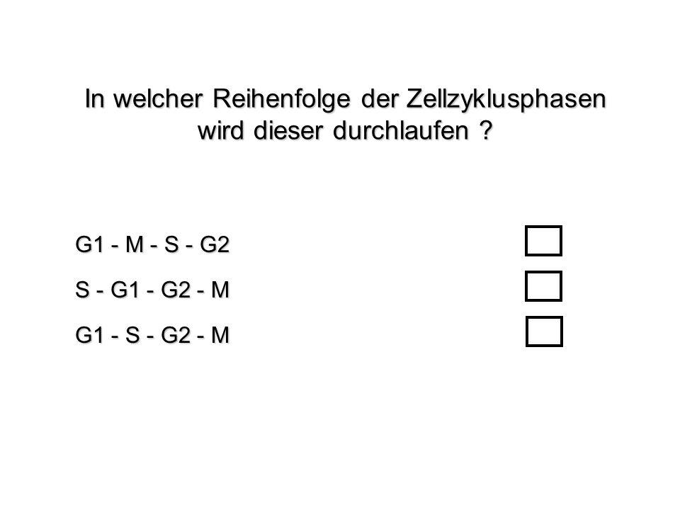 In welcher Reihenfolge der Zellzyklusphasen wird dieser durchlaufen ? G1 - S - G2 - M G1 - M - S - G2 S - G1 - G2 - M