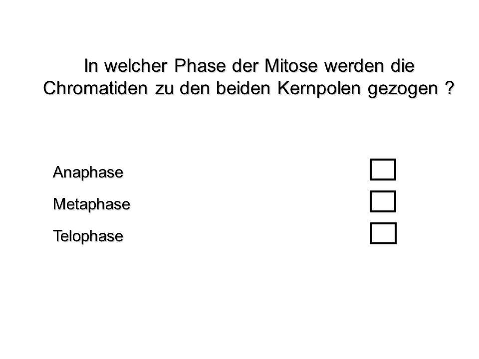 In welcher Phase der Mitose werden die Chromatiden zu den beiden Kernpolen gezogen ? TelophaseAnaphaseMetaphase