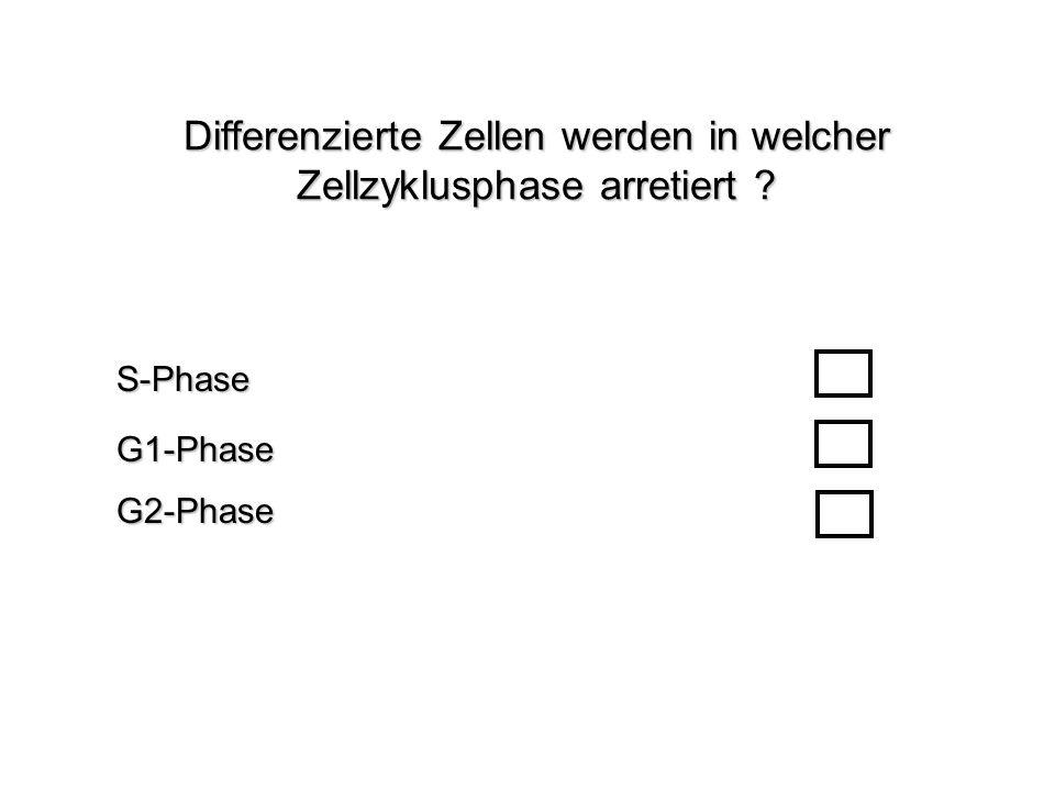 Differenzierte Zellen werden in welcher Zellzyklusphase arretiert ? G1-PhaseS-PhaseG2-Phase