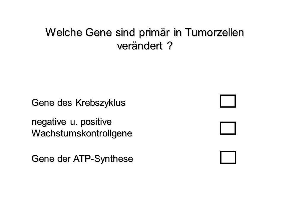 Welche Gene sind primär in Tumorzellen verändert ? Gene der ATP-Synthese Gene des Krebszyklus negative u. positive Wachstumskontrollgene