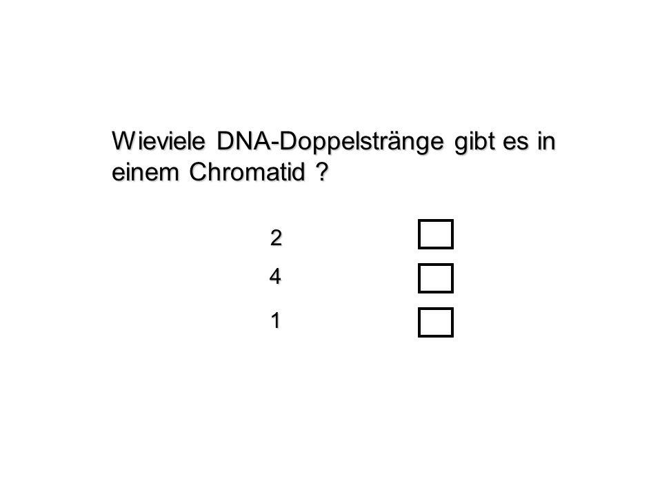 Wieviele DNA-Doppelstränge gibt es in einem Chromatid ? 24 1