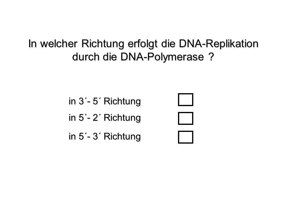 In welcher Richtung erfolgt die DNA-Replikation durch die DNA-Polymerase ? in 5´- 2´ Richtung in 3´- 5´ Richtung in 5´- 3´ Richtung