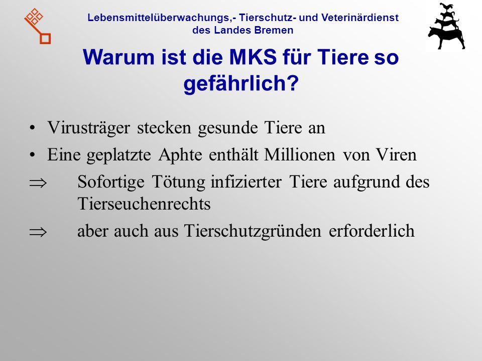 Lebensmittelüberwachungs,- Tierschutz- und Veterinärdienst des Landes Bremen Warum ist die MKS für Tiere so gefährlich? Virusträger stecken gesunde Ti