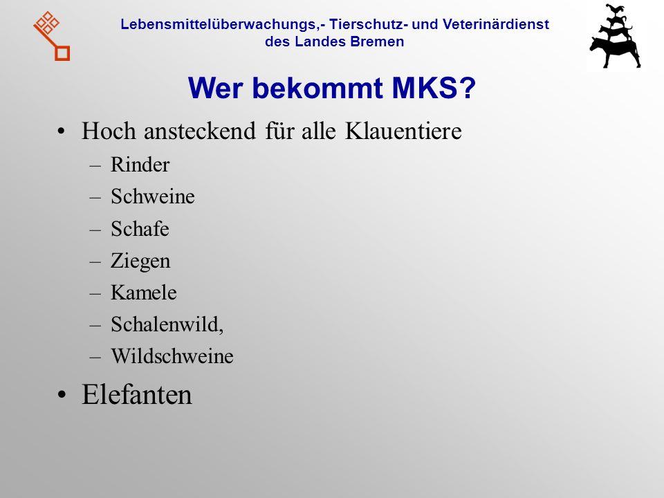 Lebensmittelüberwachungs,- Tierschutz- und Veterinärdienst des Landes Bremen Wer bekommt MKS? Hoch ansteckend für alle Klauentiere –Rinder –Schweine –