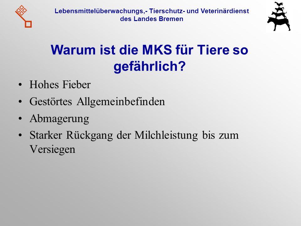 Lebensmittelüberwachungs,- Tierschutz- und Veterinärdienst des Landes Bremen Warum ist die MKS für Tiere so gefährlich? Hohes Fieber Gestörtes Allgeme
