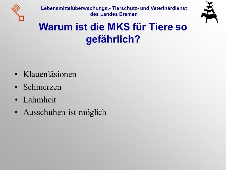 Lebensmittelüberwachungs,- Tierschutz- und Veterinärdienst des Landes Bremen Warum ist die MKS für Tiere so gefährlich? Klauenläsionen Schmerzen Lahmh