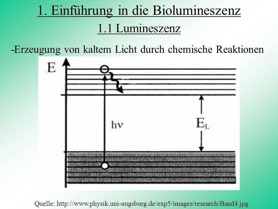 Biolumineszenz = Die Fähigkeit von Lebewesen selbst oder mit Hilfe von Symbionten Licht zu erzeugen griechisch bios:= Leben lateinisch lumen := Licht 1.2 Biolumineszenz 1.