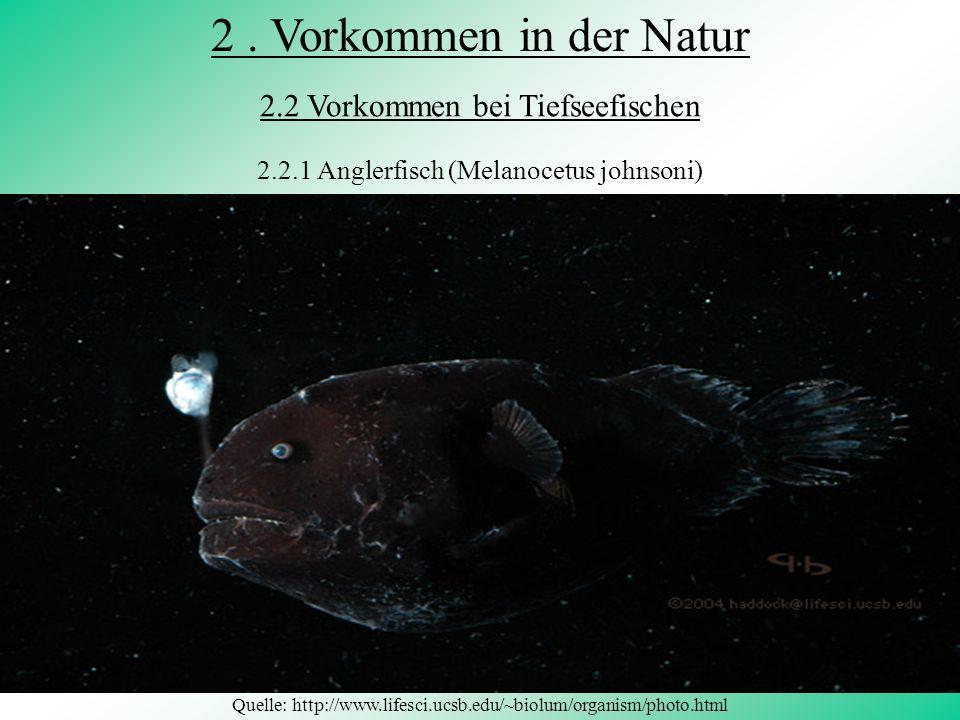 Erkennung von Schadstoffen im Wasser Quelle: http://www.tfh-wildau.de/akrause/vibrio_fischeri050601.jpg Vibrio fischeri Testorganismen
