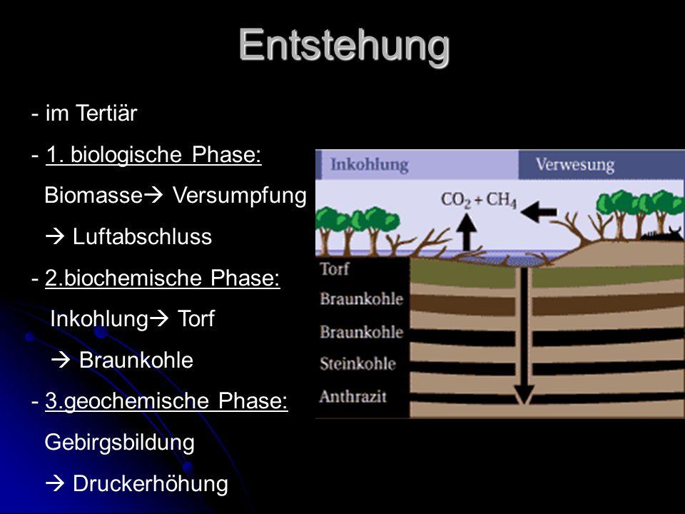 Entstehung - im Tertiär - 1. biologische Phase: Biomasse Versumpfung Luftabschluss - 2.biochemische Phase: Inkohlung Torf Braunkohle - 3.geochemische