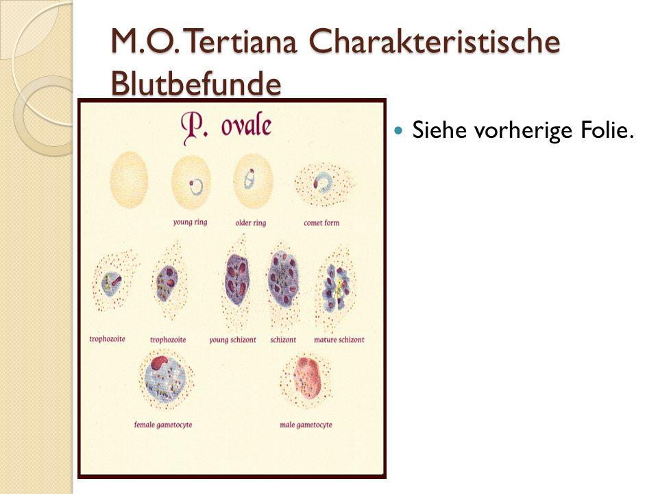 M.O. Tertiana Charakteristische Blutbefunde Siehe vorherige Folie.