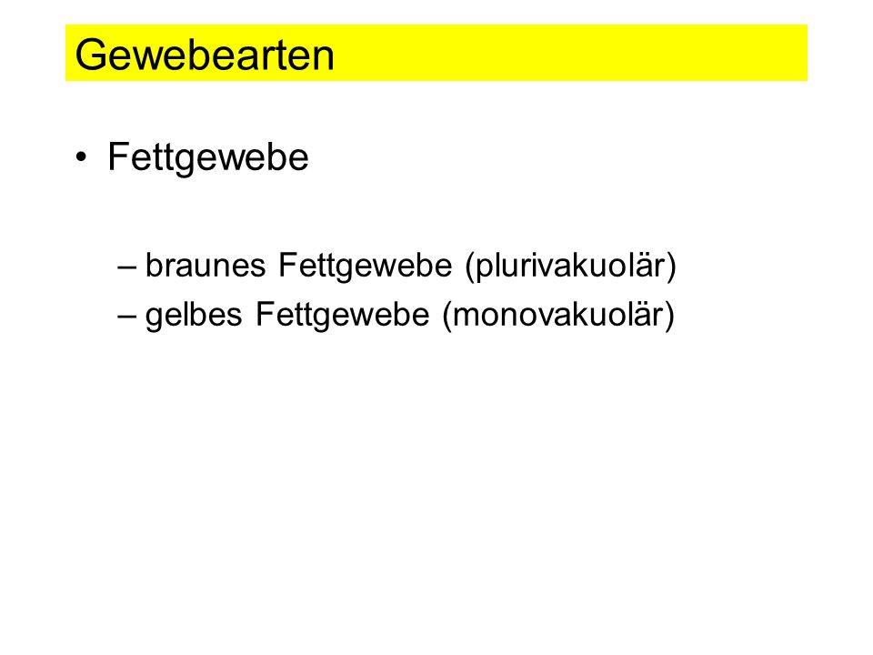 Gewebearten Fettgewebe –braunes Fettgewebe (plurivakuolär) –gelbes Fettgewebe (monovakuolär)