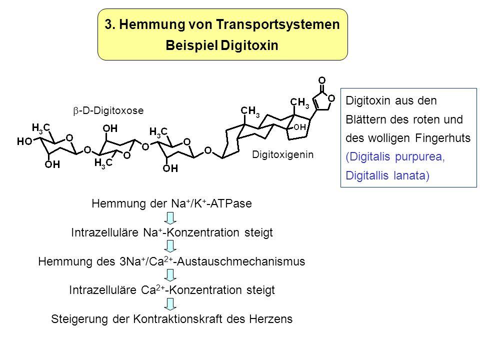 3. Hemmung von Transportsystemen Beispiel Digitoxin Digitoxin aus den Blättern des roten und des wolligen Fingerhuts (Digitalis purpurea, Digitallis l