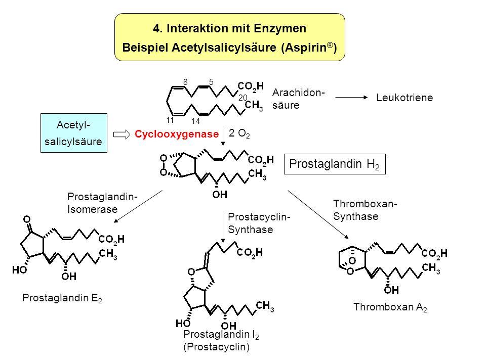 Prostaglandin H 2 4. Interaktion mit Enzymen Beispiel Acetylsalicylsäure (Aspirin ® ) Leukotriene 2 O 2 Thromboxan A 2 Prostaglandin I 2 (Prostacyclin