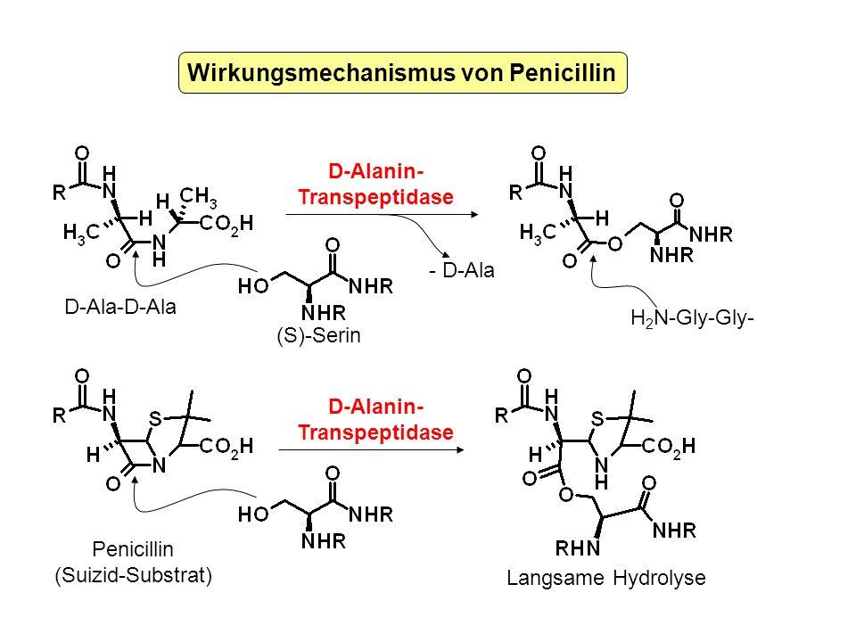 Wirkungsmechanismus von Penicillin H 2 N-Gly-Gly- D-Ala-D-Ala (S)-Serin Penicillin (Suizid-Substrat) D-Alanin- Transpeptidase D-Alanin- Transpeptidase
