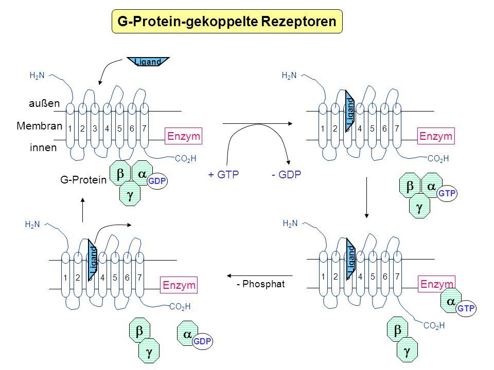 G-Protein-gekoppelte Rezeptoren 234567 1 H2NH2N CO 2 H außen innen Enzym Ligand GDP Membran 234567 1 H2NH2N CO 2 H Enzym Ligand GTP + GTP G-Protein -