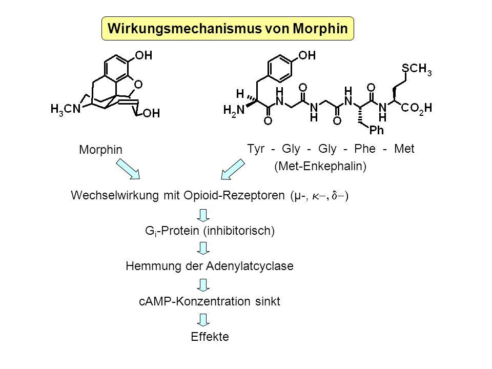 Wirkungsmechanismus von Morphin Morphin Tyr - Gly - Gly - Phe - Met (Met-Enkephalin) Wechselwirkung mit Opioid-Rezeptoren (µ-, G i -Protein (inhibitor