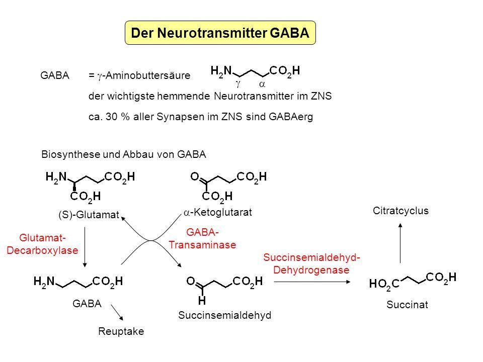 Der Neurotransmitter GABA GABA = -Aminobuttersäure der wichtigste hemmende Neurotransmitter im ZNS ca. 30 % aller Synapsen im ZNS sind GABAerg Biosynt