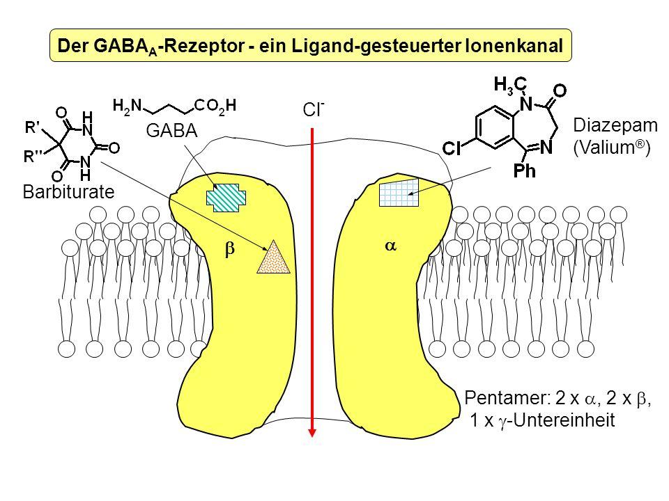 Cl - GABA Diazepam (Valium ® ) Der GABA A -Rezeptor - ein Ligand-gesteuerter Ionenkanal Pentamer: 2 x, 2 x, 1 x -Untereinheit Barbiturate