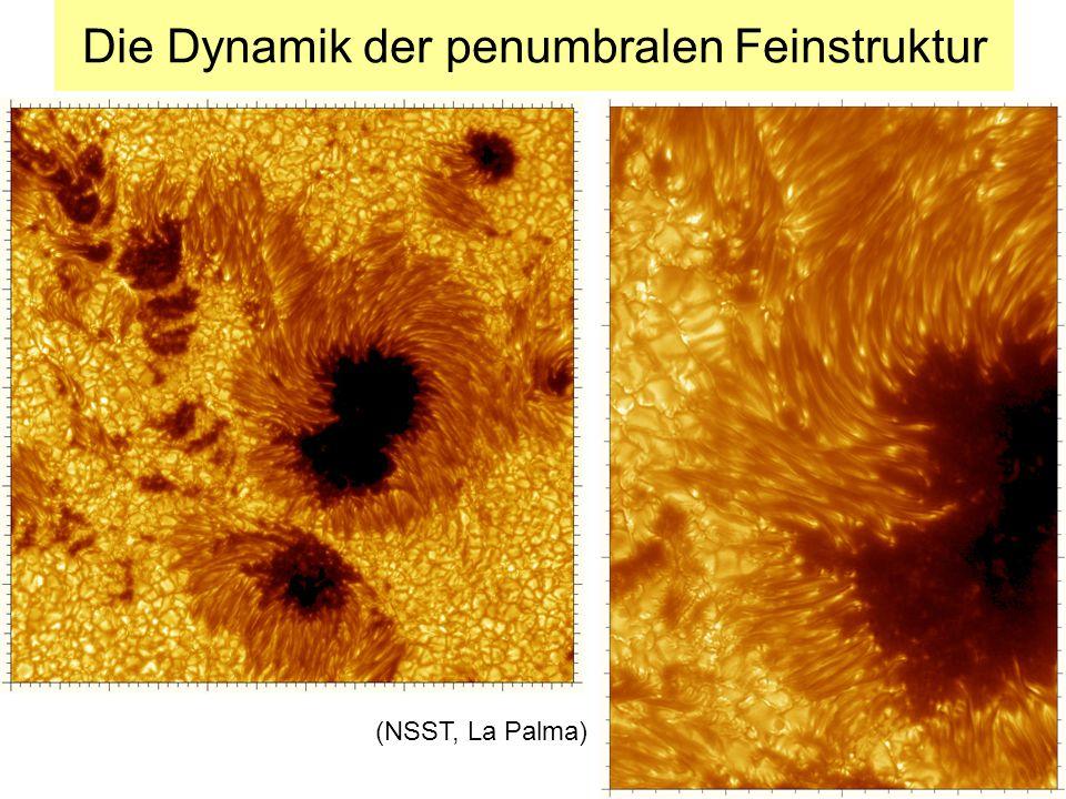 Die Dynamik der penumbralen Feinstruktur (NSST, La Palma)