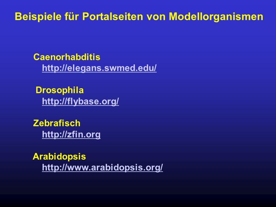 Beispiele für Portalseiten von Modellorganismen Caenorhabditis http://elegans.swmed.edu/ Drosophila http://flybase.org/ Zebrafisch http://zfin.org Ara