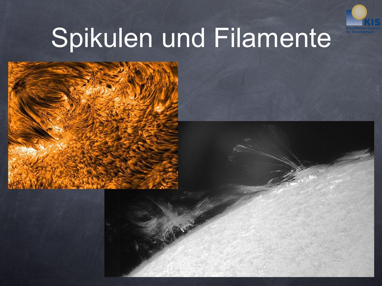 Spikulen und Filamente