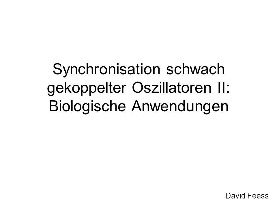 Synchronisation schwach gekoppelter Oszillatoren II: Biologische Anwendungen David Feess