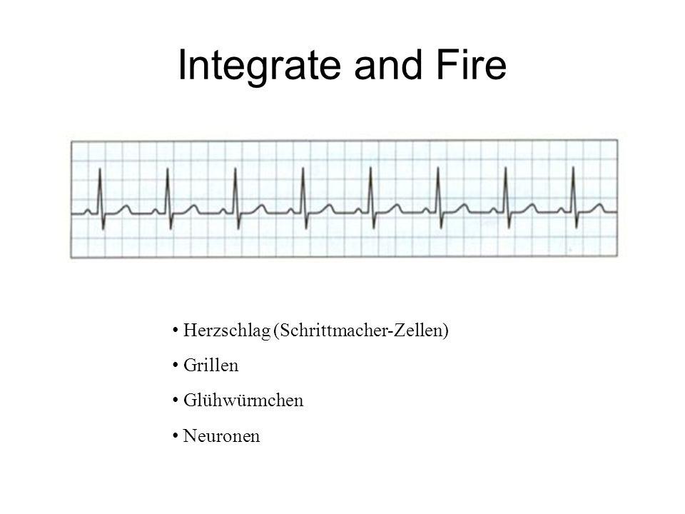 Integrate and Fire Herzschlag (Schrittmacher-Zellen) Grillen Glühwürmchen Neuronen