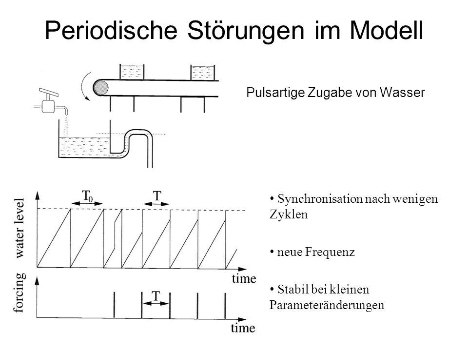 Periodische Störungen im Modell Pulsartige Zugabe von Wasser Synchronisation nach wenigen Zyklen neue Frequenz Stabil bei kleinen Parameteränderungen