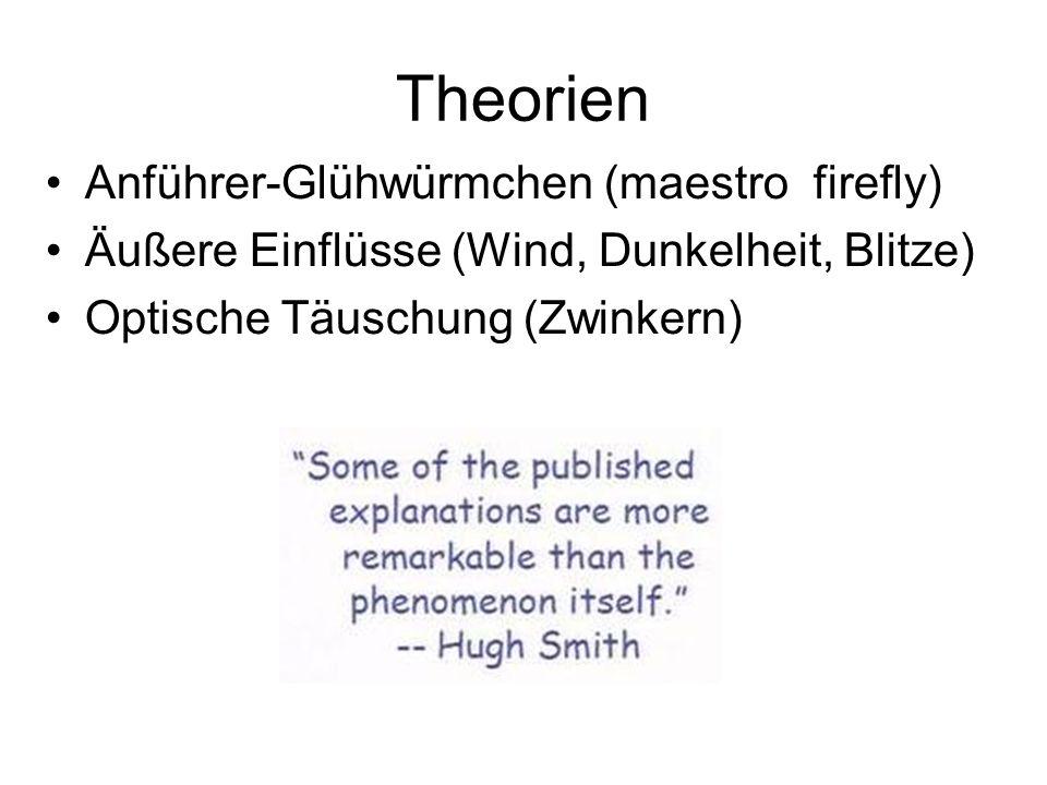 Theorien Anführer-Glühwürmchen (maestro firefly) Äußere Einflüsse (Wind, Dunkelheit, Blitze) Optische Täuschung (Zwinkern)