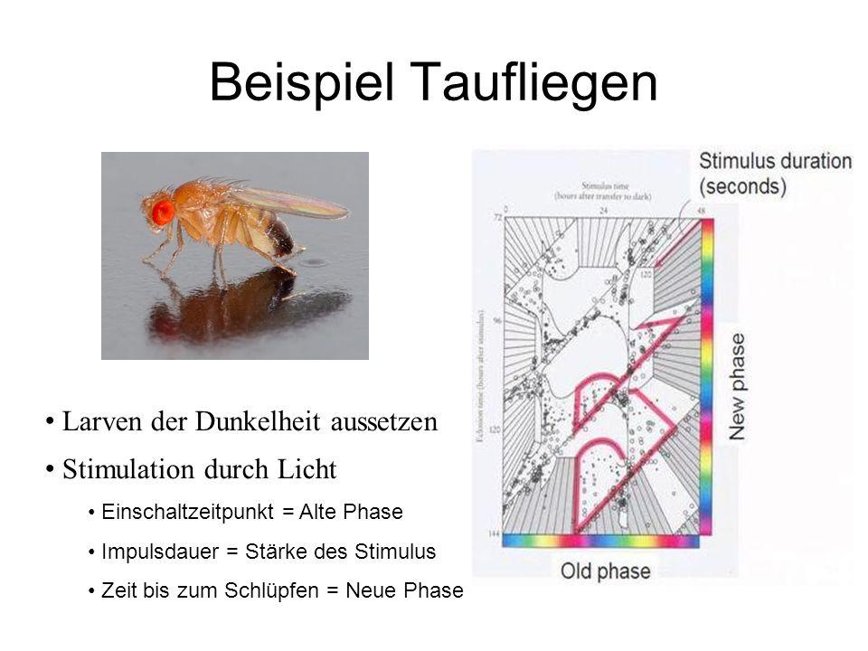 Beispiel Taufliegen Larven der Dunkelheit aussetzen Stimulation durch Licht Einschaltzeitpunkt = Alte Phase Impulsdauer = Stärke des Stimulus Zeit bis