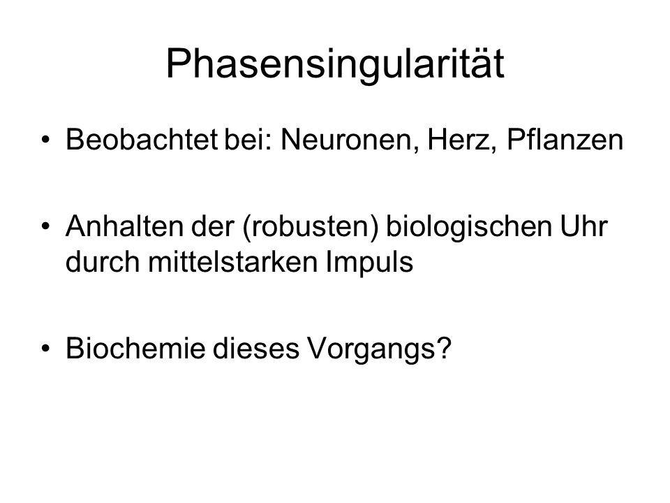 Phasensingularität Beobachtet bei: Neuronen, Herz, Pflanzen Anhalten der (robusten) biologischen Uhr durch mittelstarken Impuls Biochemie dieses Vorgangs