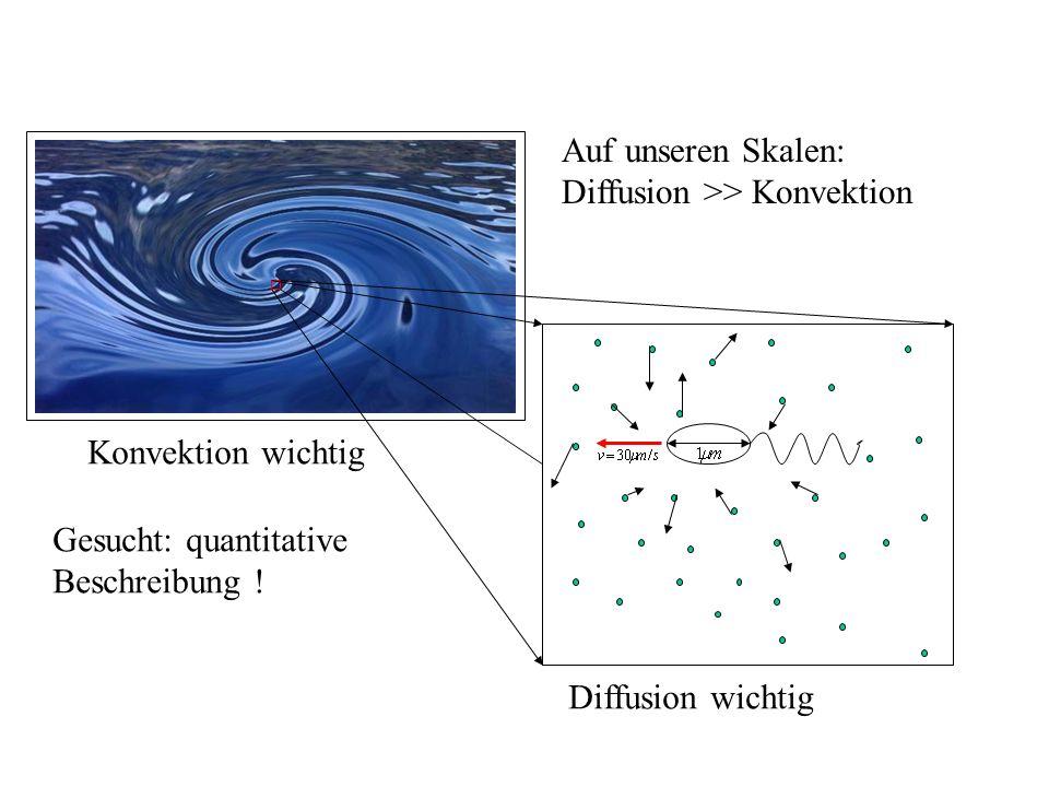 Konvektion wichtig Auf unseren Skalen: Diffusion >> Konvektion Diffusion wichtig Gesucht: quantitative Beschreibung !