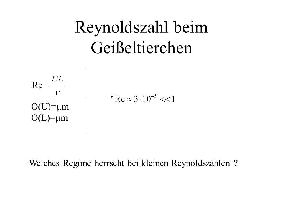 Reynoldszahl beim Geißeltierchen O(U)=µm O(L)=µm Welches Regime herrscht bei kleinen Reynoldszahlen ?