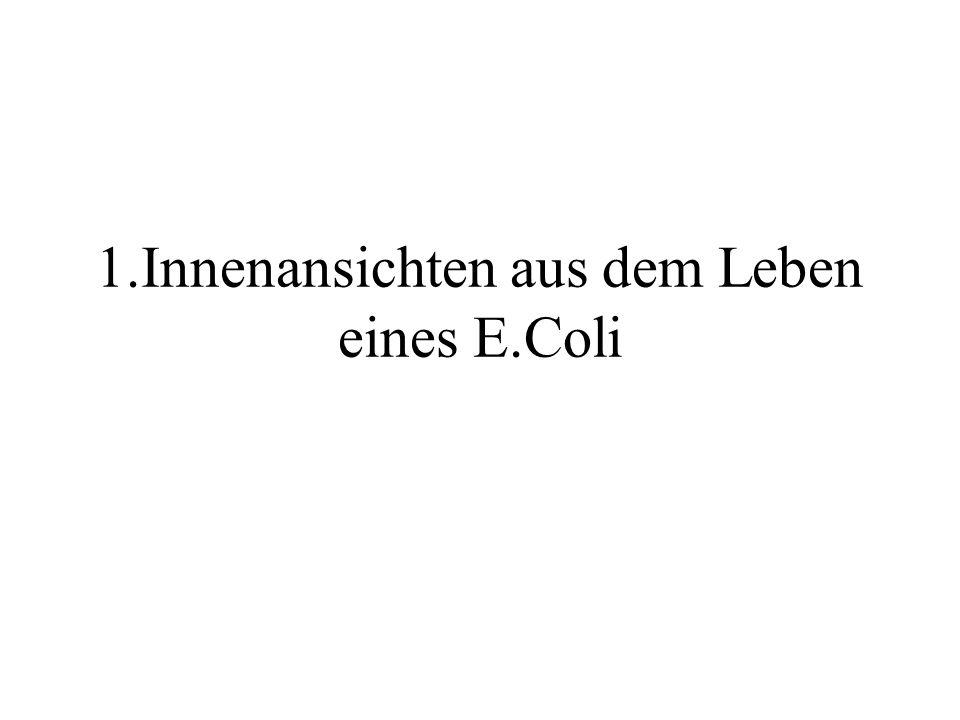 1.Innenansichten aus dem Leben eines E.Coli