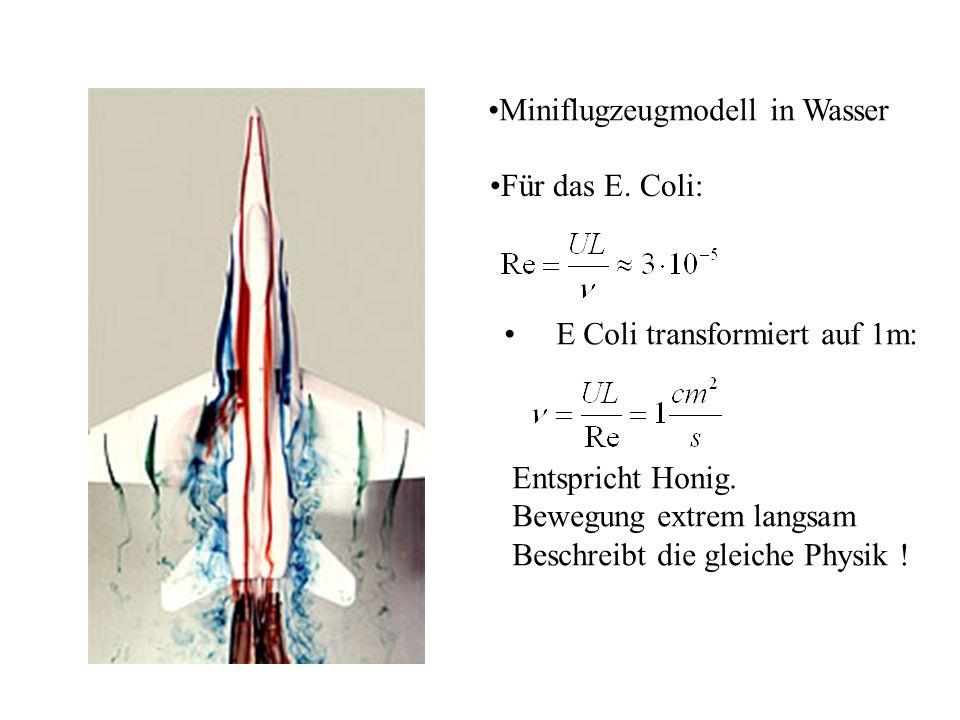 Miniflugzeugmodell in Wasser Für das E.Coli: E Coli transformiert auf 1m: Entspricht Honig.