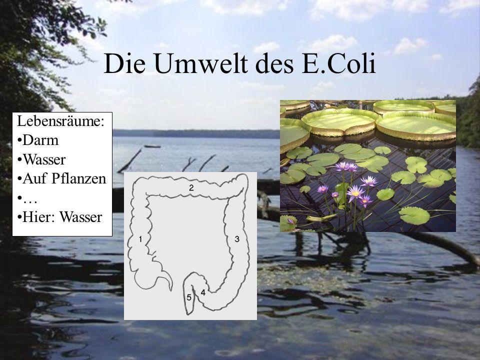 Die Umwelt des E.Coli Lebensräume: Darm Wasser Auf Pflanzen … Hier: Wasser