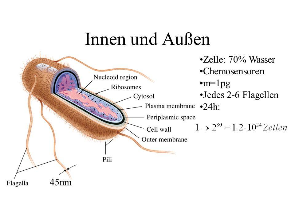 Innen und Außen Zelle: 70% Wasser Chemosensoren m=1pg Jedes 2-6 Flagellen 24h: 45nm