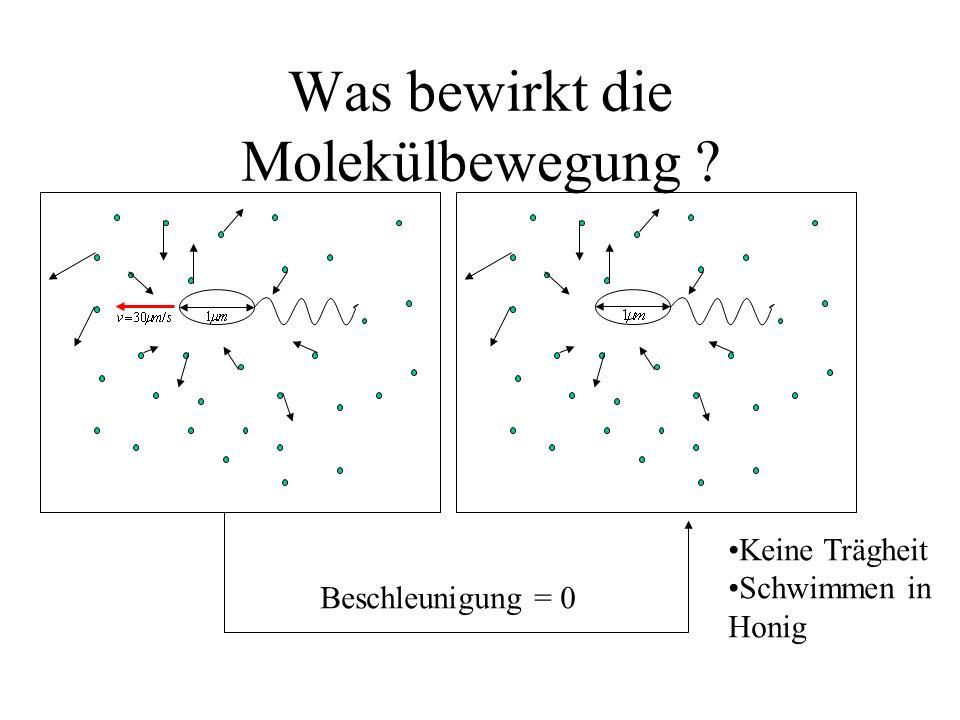 Was bewirkt die Molekülbewegung ? Beschleunigung = 0 Keine Trägheit Schwimmen in Honig