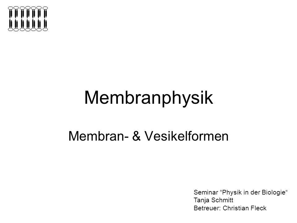 Membranphysik Membran- & Vesikelformen Seminar Physik in der Biologie Tanja Schmitt Betreuer: Christian Fleck