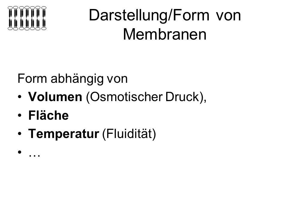 Darstellung/Form von Membranen Form abhängig von Volumen (Osmotischer Druck), Fläche Temperatur (Fluidität) …