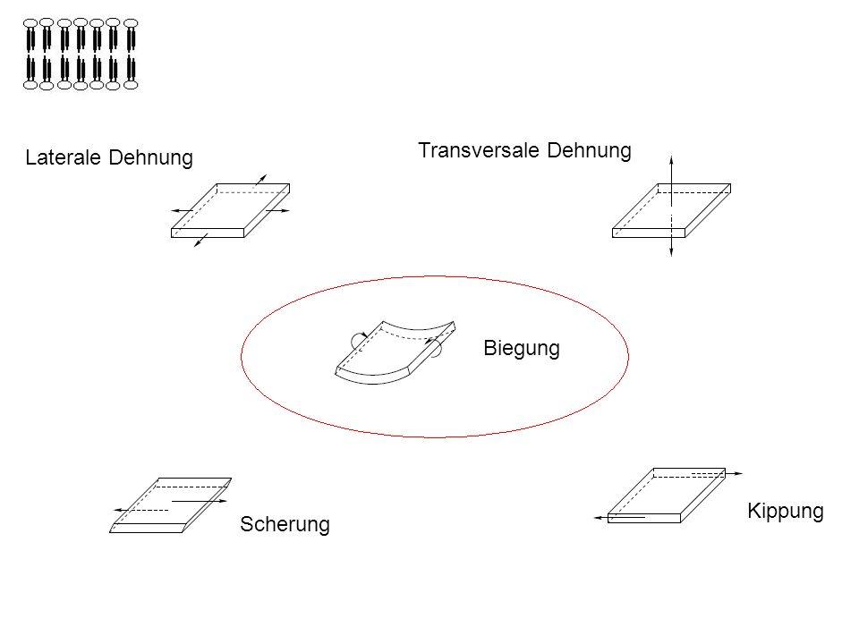 Laterale Dehnung Transversale Dehnung Biegung Scherung Kippung Biegung