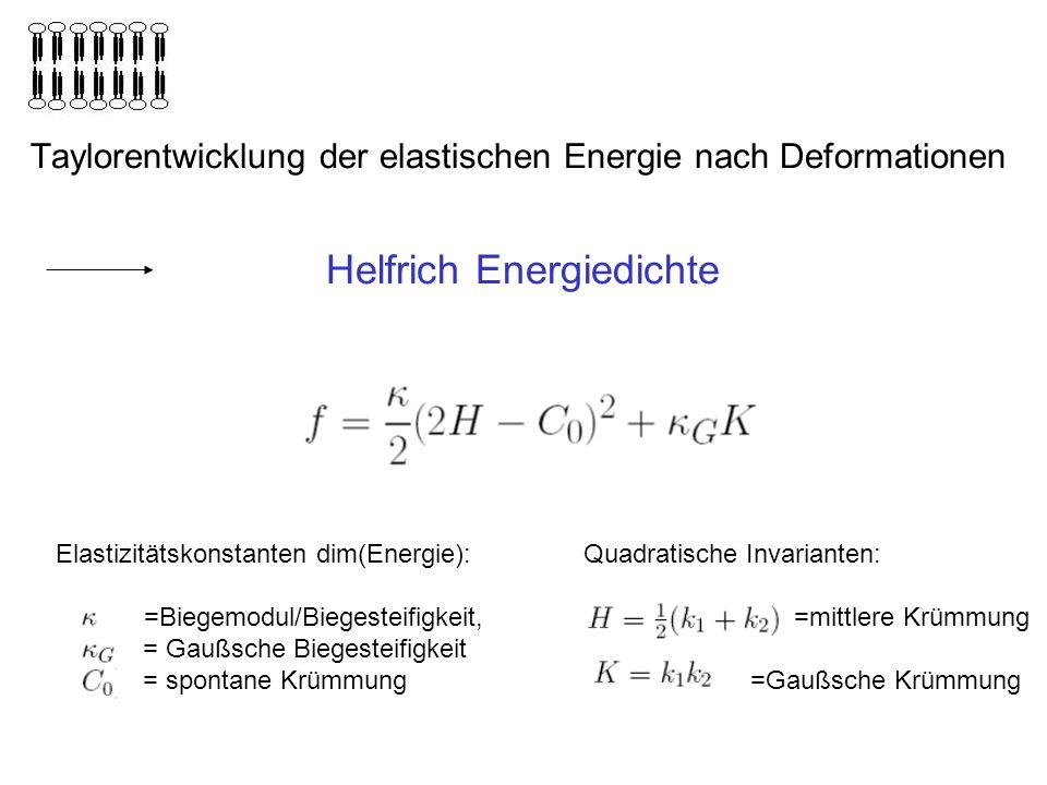 Taylorentwicklung der elastischen Energie nach Deformationen Helfrich Energiedichte Elastizitätskonstanten dim(Energie): = =Biegemodul/Biegesteifigkeit, = Gaußsche Biegesteifigkeit = spontane Krümmung Quadratische Invarianten: =mittlere Krümmung =Gaußsche Krümmung