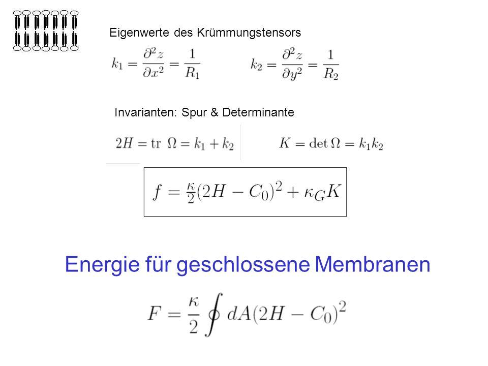 Energie für geschlossene Membranen Eigenwerte des Krümmungstensors Invarianten: Spur & Determinante