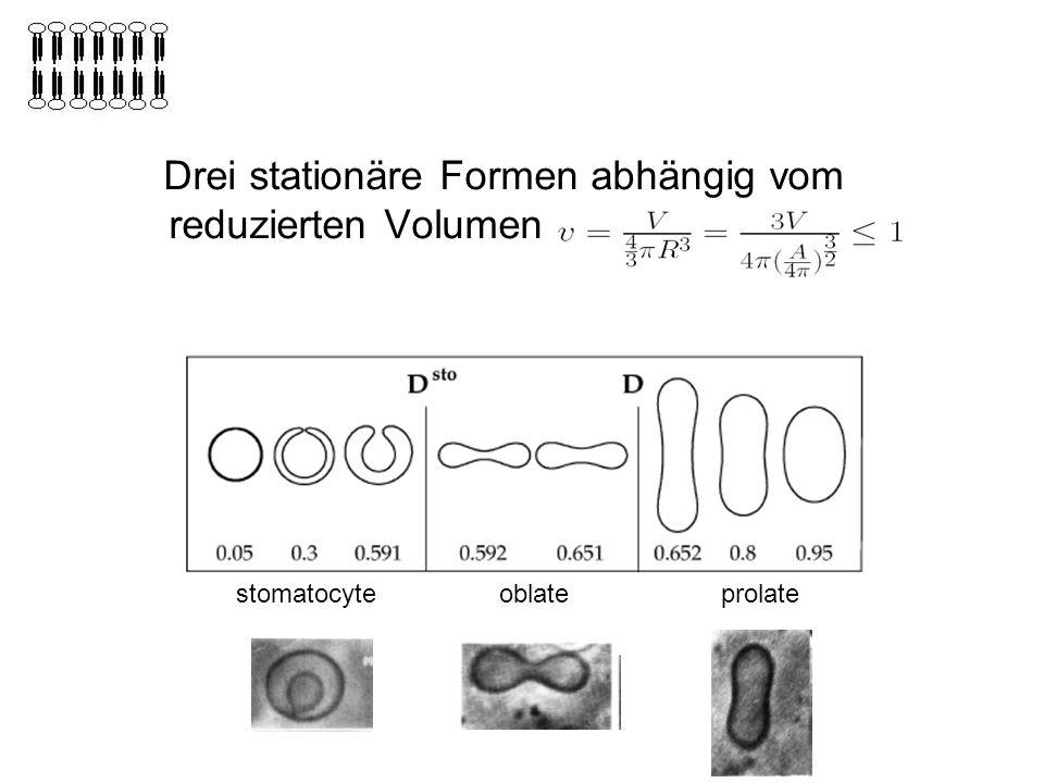 Drei stationäre Formen abhängig vom reduzierten Volumen v stomatocyteoblateprolate