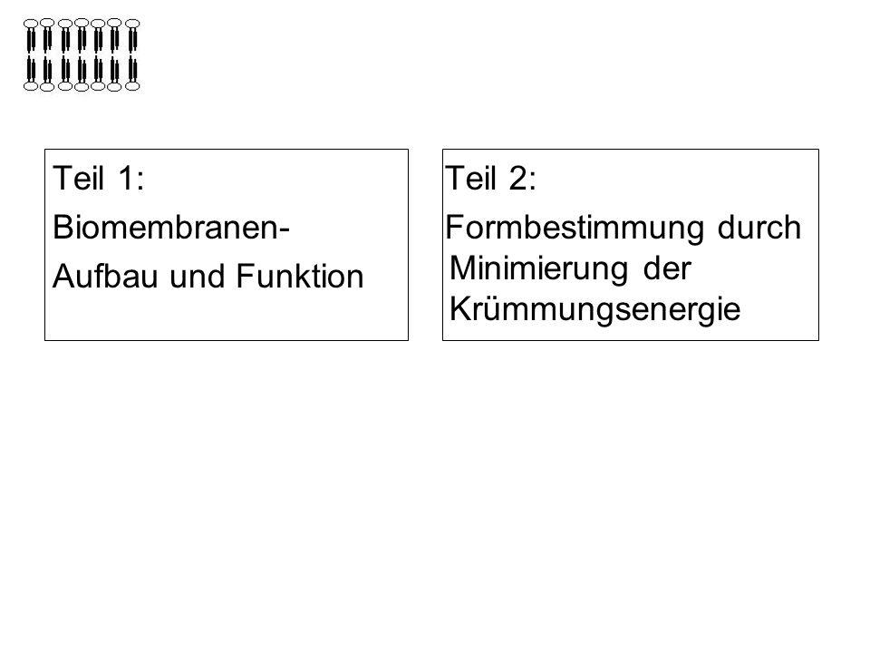 Teil 1: Biomembranen- Aufbau und Funktion Teil 2: Formbestimmung durch Minimierung der Krümmungsenergie