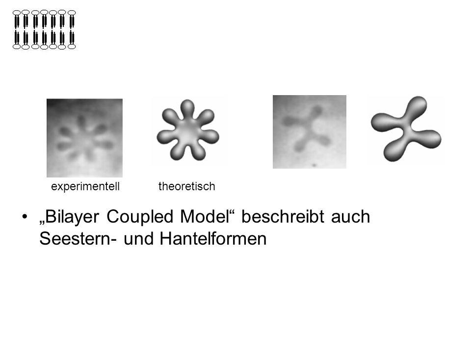 Bilayer Coupled Model beschreibt auch Seestern- und Hantelformen experimentelltheoretisch