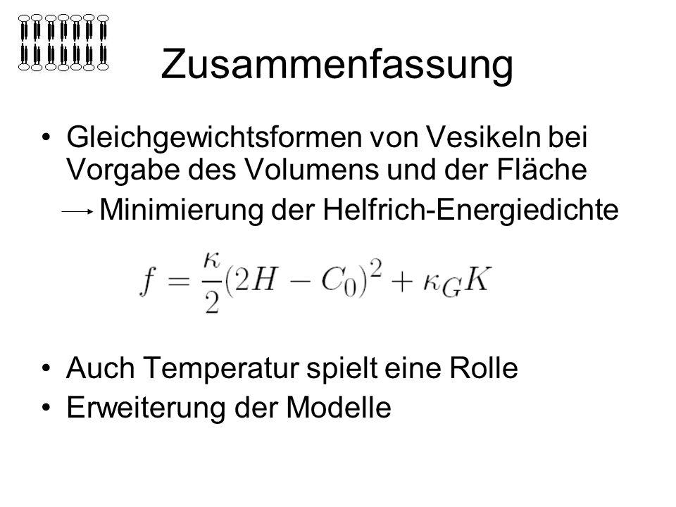 Zusammenfassung Gleichgewichtsformen von Vesikeln bei Vorgabe des Volumens und der Fläche Minimierung der Helfrich-Energiedichte Auch Temperatur spielt eine Rolle Erweiterung der Modelle